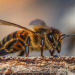 pčela propolis